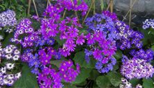 flowers in spring1