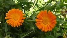 flowers in spring2