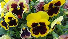 flowers in spring4