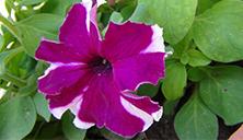 flowers in spring5