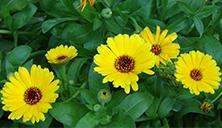 flowers in spring6