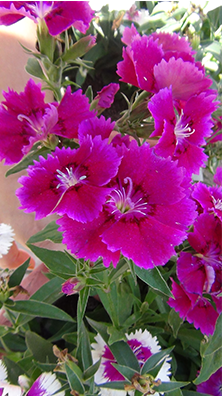 flowers in spring8